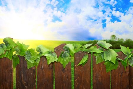 wood paling and sunny landscape Stock Photo - 5107661