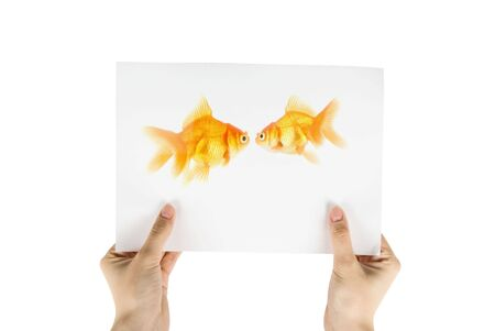 Photo of gold fish isolated on white background;  photo