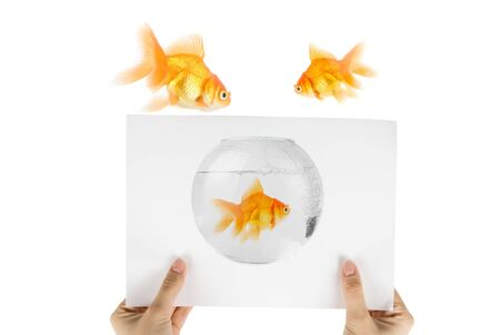 Photo of gold fish isolated on white background photo
