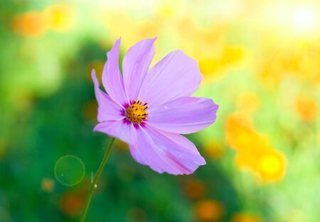 flower with sun beam on bokeh background Stock Photo - 5381698