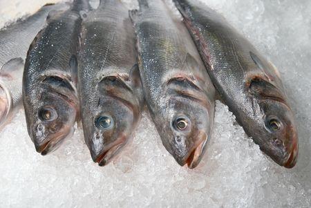 fish store: coolled pescado fresco en hielo brillante de fondo Foto de archivo