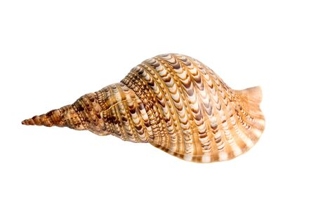 sea shell isolated over a white background for design photo