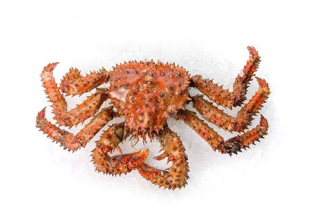 fish ice: The King crab on a white ice background