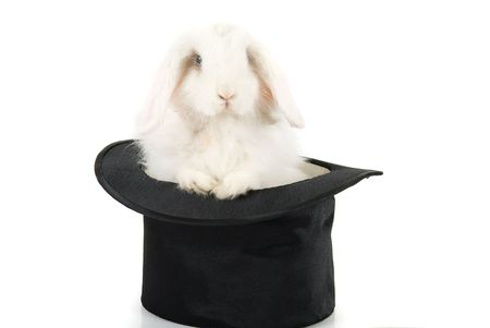 Little rabbit in a top magic hat isolated on  a white background  photo
