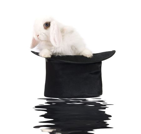 Little rabbit at black hat with reflection isolated on a white background photo
