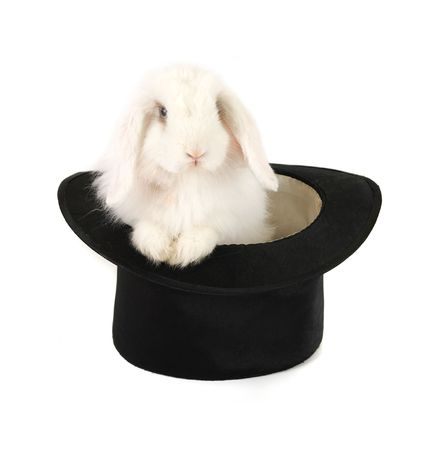 White rabbit at black hat isolated on a white background photo