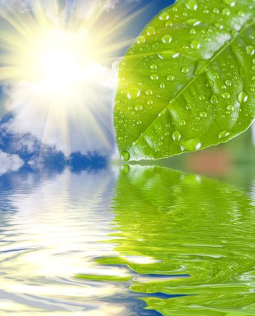 sun drop: green leave at the water with reflection