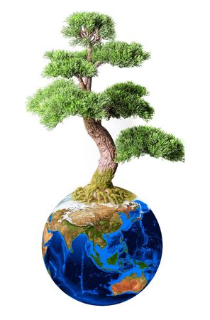 Bonsai from earth planet isolated on white concept photo