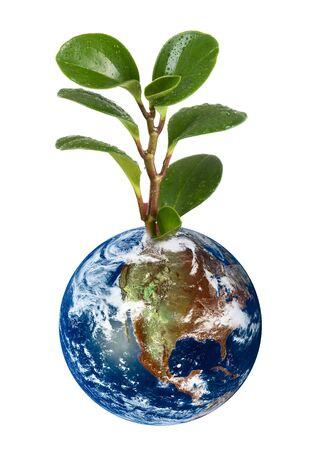 paz mundo: planeta de tierra 3D con planta sobre fondo blanco.