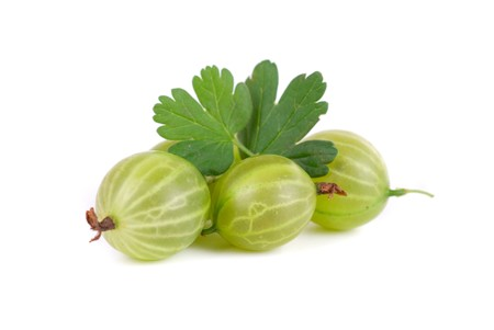 green ripe gooseberries isolated on a white background photo