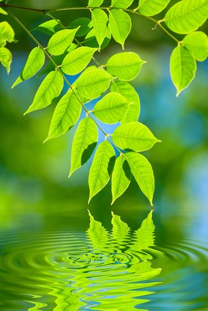 colorful water surface: green leaves reflecting in the water, shallow focus
