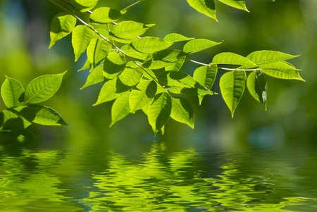 foglie verdi, riflettendo in acqua, shallow focus