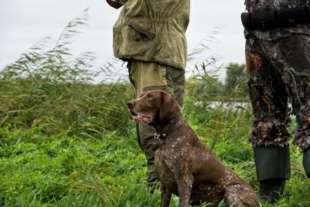 German pointer and closeup of two man at hunting photo