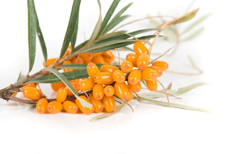 Cluster mature orange sea-buckthorn berries with leaves on a white photo