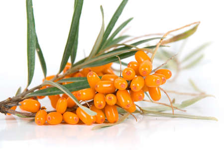 seabuckthorn: Cluster mature orange sea-buckthorn berries with leaves on a white Stock Photo