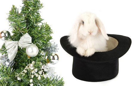 White rabbit at black hat - symbol of 2011 new year isolated on a white background photo