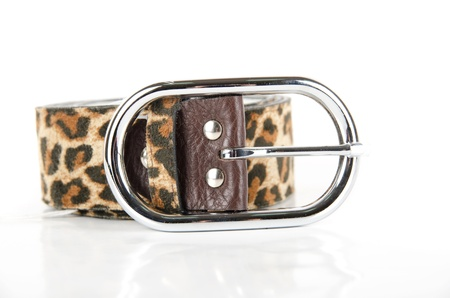 leopard belt isolated on a white background Stock Photo - 9096236
