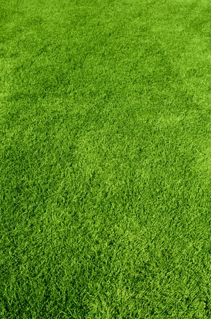 Photo of the beautiful green grass texture photo