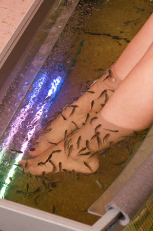 Fish spa pedicure wellness skin care treatment Stock Photo - 12326462