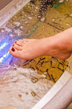 Fish spa pedicure wellness skin care treatment Stock Photo - 13210560