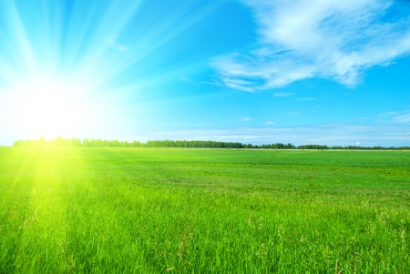 Field of green grass and perfect blue sky