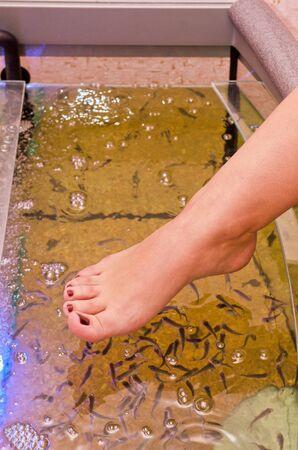 fish spa: Fish spa pedicure wellness skin care treatment Stock Photo
