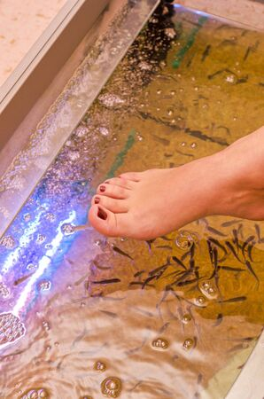 Fish spa pedicure wellness skin care treatment Stock Photo - 14551566