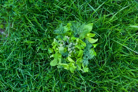 food greens at grass background photo