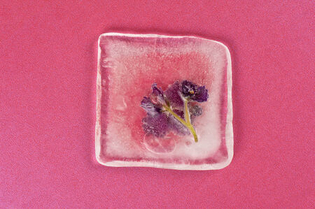 Beautiful violet flowers frozen at ice photo