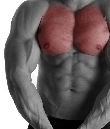 muscle gain: Muscular male torso with chest selected on white background