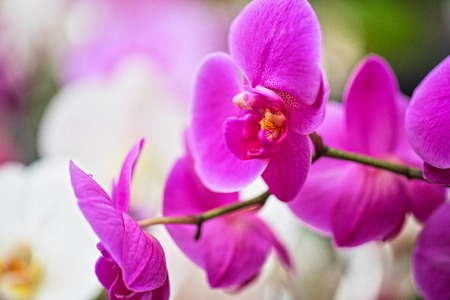 floral decoration: pink orchids at botanical garden Stock Photo