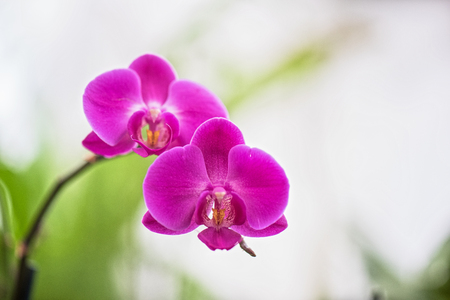 red orchid: pink orchids at botanical garden Stock Photo