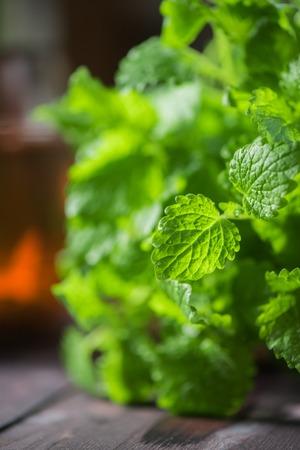lemongrass tea: Green fresh melissa Stock Photo
