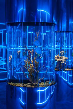 dragonfish: Interior photo in the oceanarium Stock Photo
