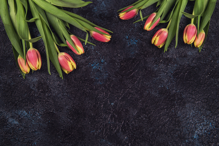 Tulips on darken concrete background for Mothers Day, spring time or Easter theme. Stock Photo