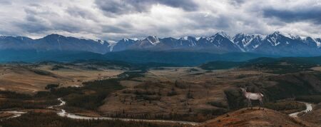 Maral deer in Kurai steppe and North-Chui ridge of Altai mountains, Russia. Cloud day. Panoramic picture Banco de Imagens