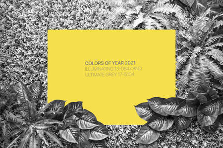 Ultimate Gray and Illuminating color background from leaves and blank for your design or text. Color of the year 2021.