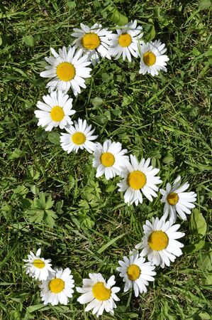 letter of daisies photo