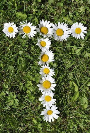 letter of daisies Stock Photo