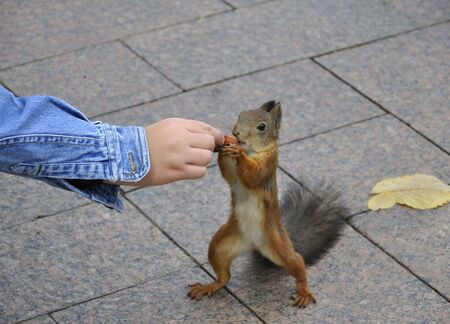 Little squirrel taking nuts from human hand Stock Photo - 7857989