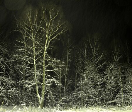 snowstorm in the night forest photo