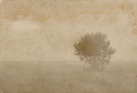 lonely tree , vintage photo