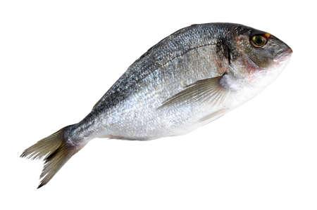 dorado fish Stock Photo - 9426935