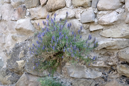 flowering plant on the rocks Stock Photo