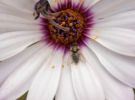 Close up shot of bee on flower