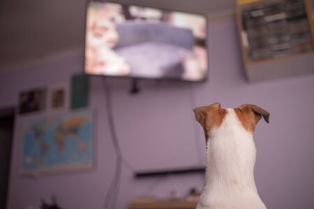 Dog watching television shot from behind