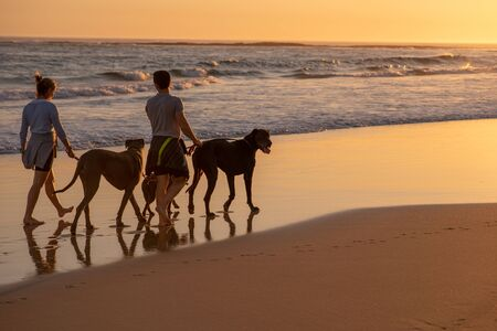 Couple taking their great dane for a walk on beach Banque d'images