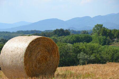 hay: Bale of hay