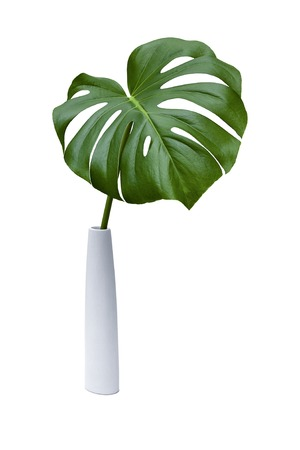 A green palm leaf on a white background