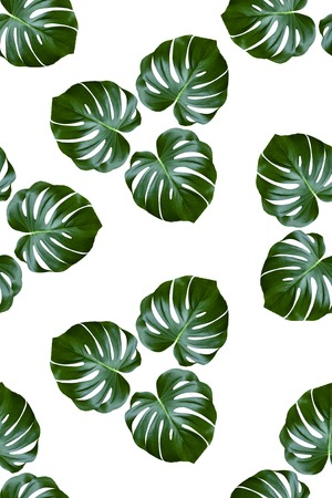 Fabric pattern with palm leaves on a white background Stock Photo